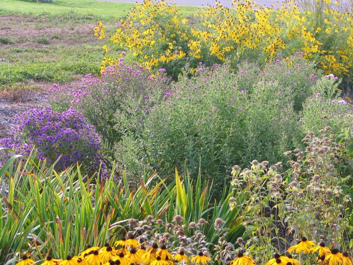 Rain Gardens Dragonfly Gardens – Rain Garden Plants