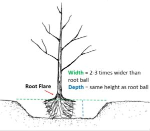 Planting hole simple